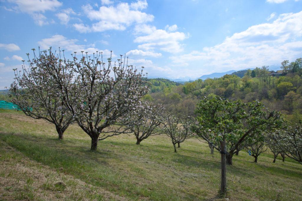 arbres_fruitiers