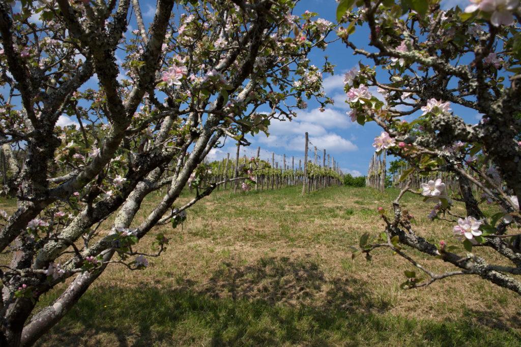 arbres_fruitiers_vignes